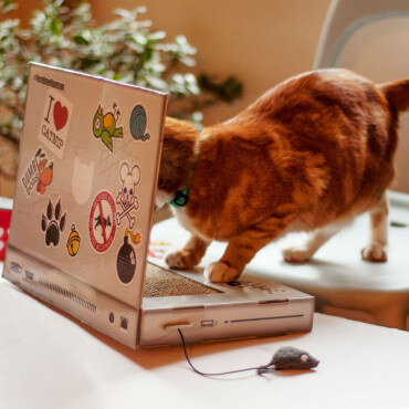 Grattoir pour Chat Ordinateur chat geek