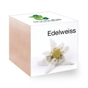 EcoCube Edelweiss bois