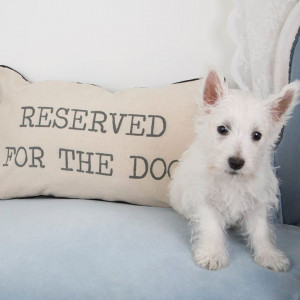 "Coussin ""Reserved For The Dog"""