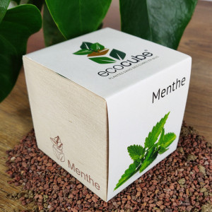 EcoCube Menthe