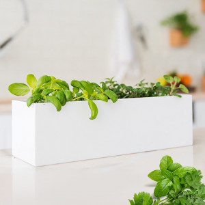 Grow Box Mini Garden Basilic et Coriandre
